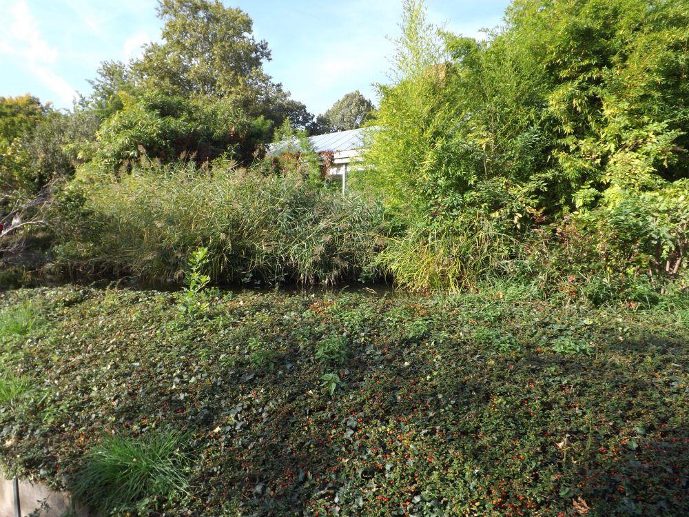 Spätere Marabuaußenanlage (Zoo Frankfurt)