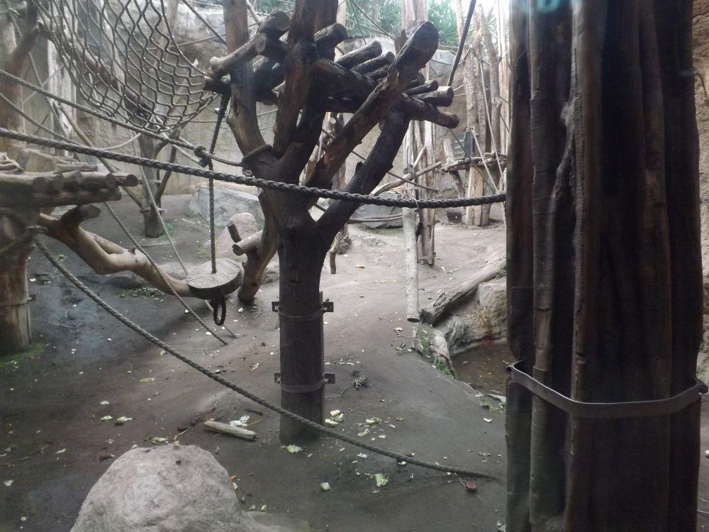 Innenanlage der Bonobos (ZooLeipzig)