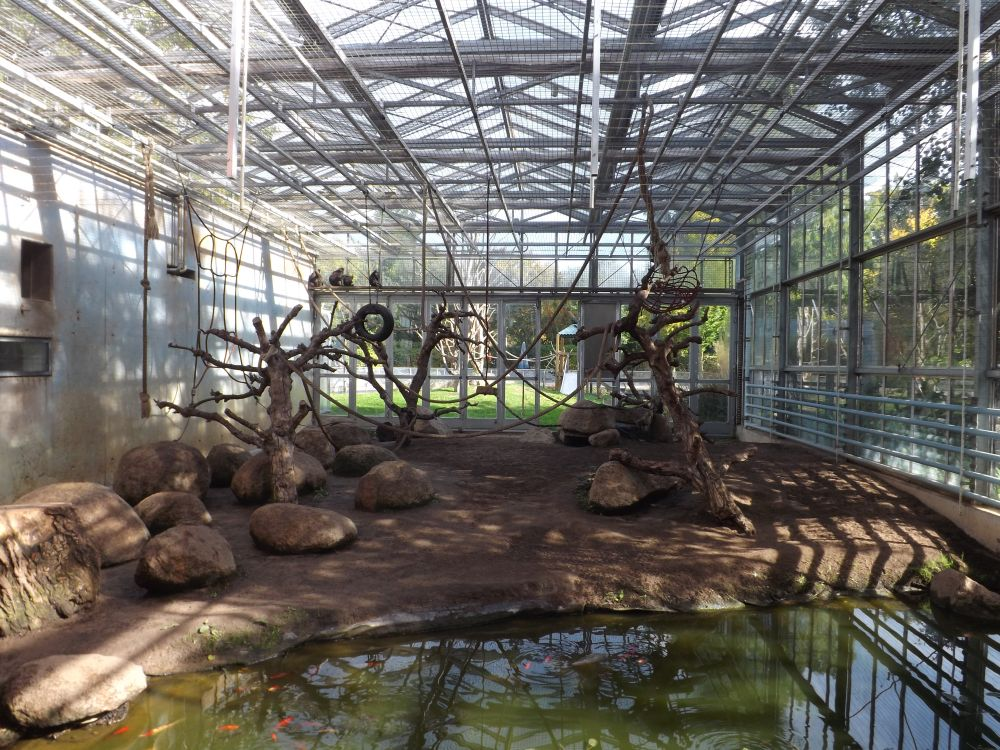 Schopfmakakenanlage, Innenansicht (Vivarium Darmstadt)