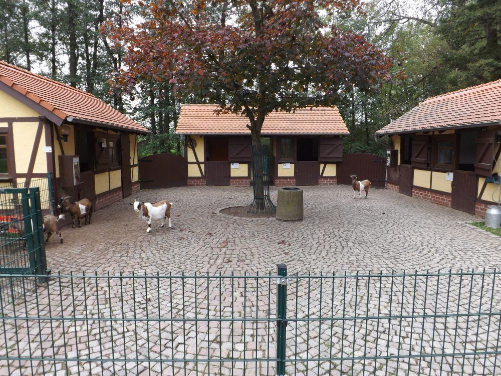 Streichelgehege Tierpark Limbach Oberfrohna Der Beutelwolf Blog