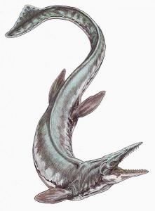 Tylosaurus proriger (Dmitry Bogdanov)