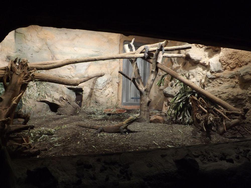Komodowarananlage (Zoo Leipzig)