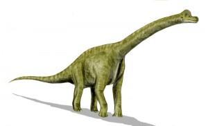 Brachiosaurus altithorax (© N. Tamura)
