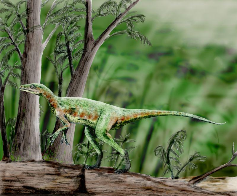 Eoraptor lunensis (© N. Tamura)