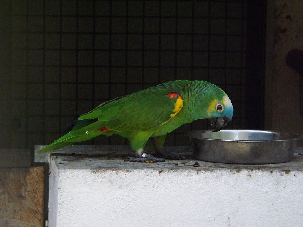 anzahl beine papagei