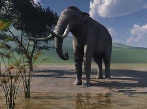 Südelefant  (© N. Tamura)