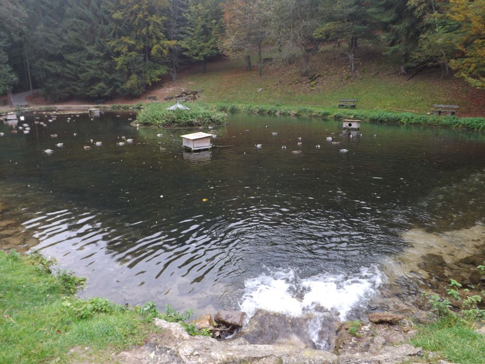Ententeich (Wildpark Hundshaupten)