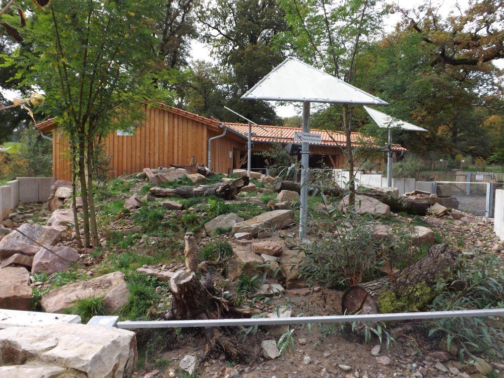 Erdmännchenanlage (Tierpark Sababurg)