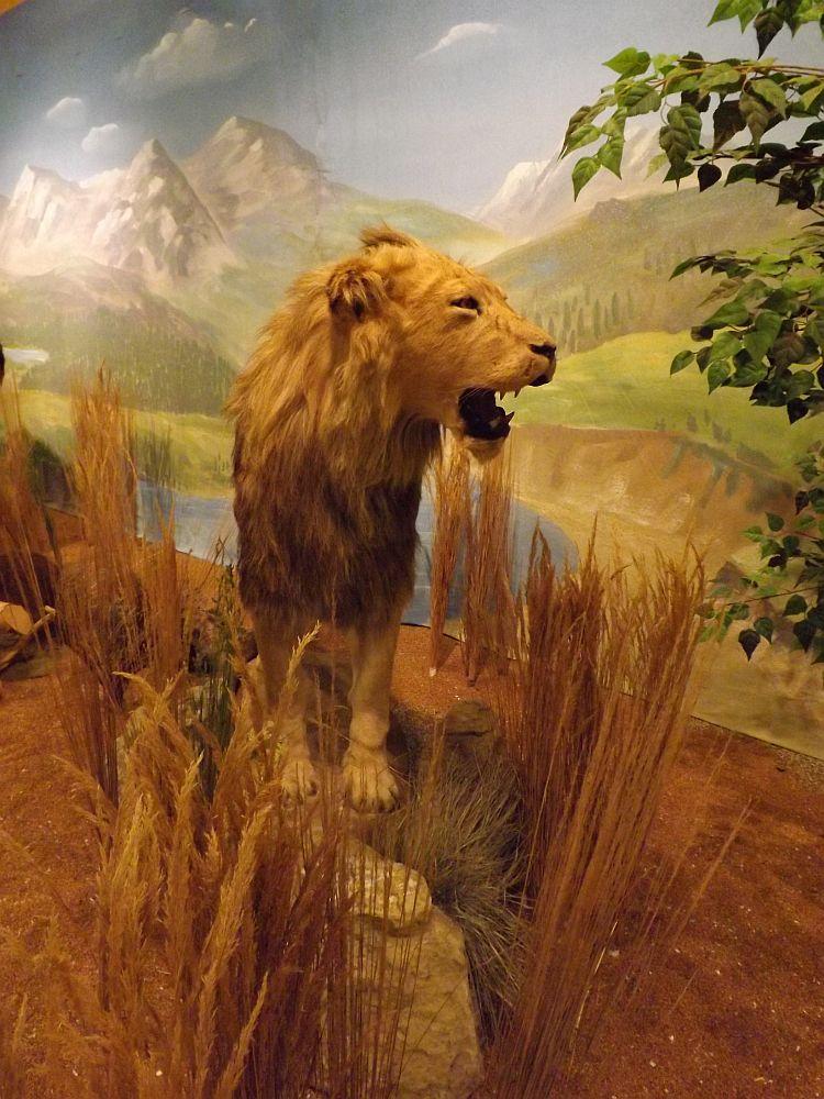 """Höhlenlöwe (""""Eiszeit im Kölner Zoo"""")"""