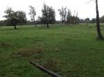 Weide der Heckrinder (Tierpark Sababurg)