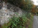 Mauer des Tierpark Sababurg