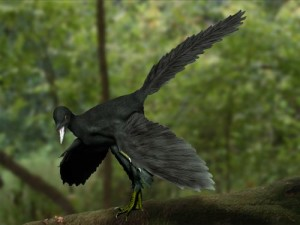 Archaeopteryx lithographica (© N. Tamura)