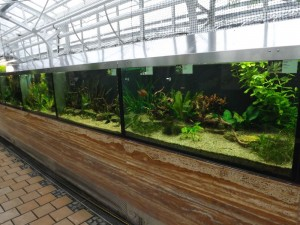 Aquarien im Waserpflanzenhaus (Botanischer Garten München)