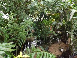 Wasserpflanzenhaus (Botanischer Garten München)