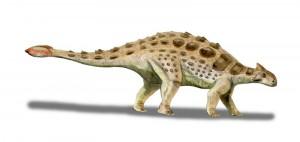 Ankylosaurus magniventris (© N. Tamura)