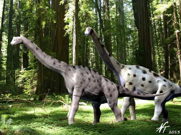 Europasaurus holgeri (© N. Tamura)