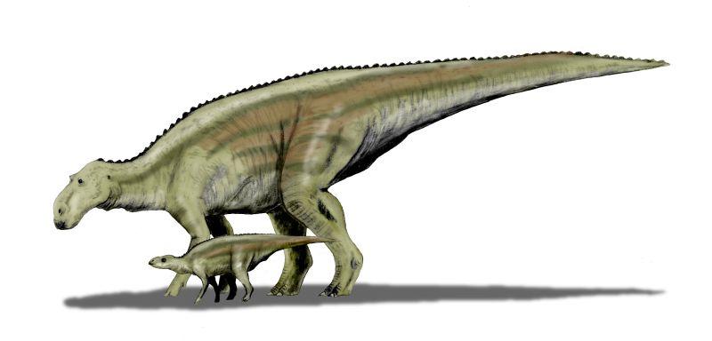 Maiasaura peeblesorum (© N. Tamura)