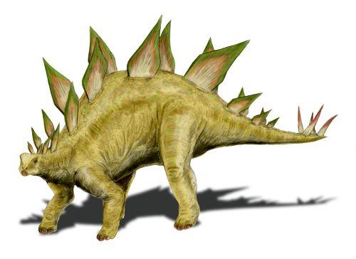 Stegosaurus stenops (© N. Tamura)