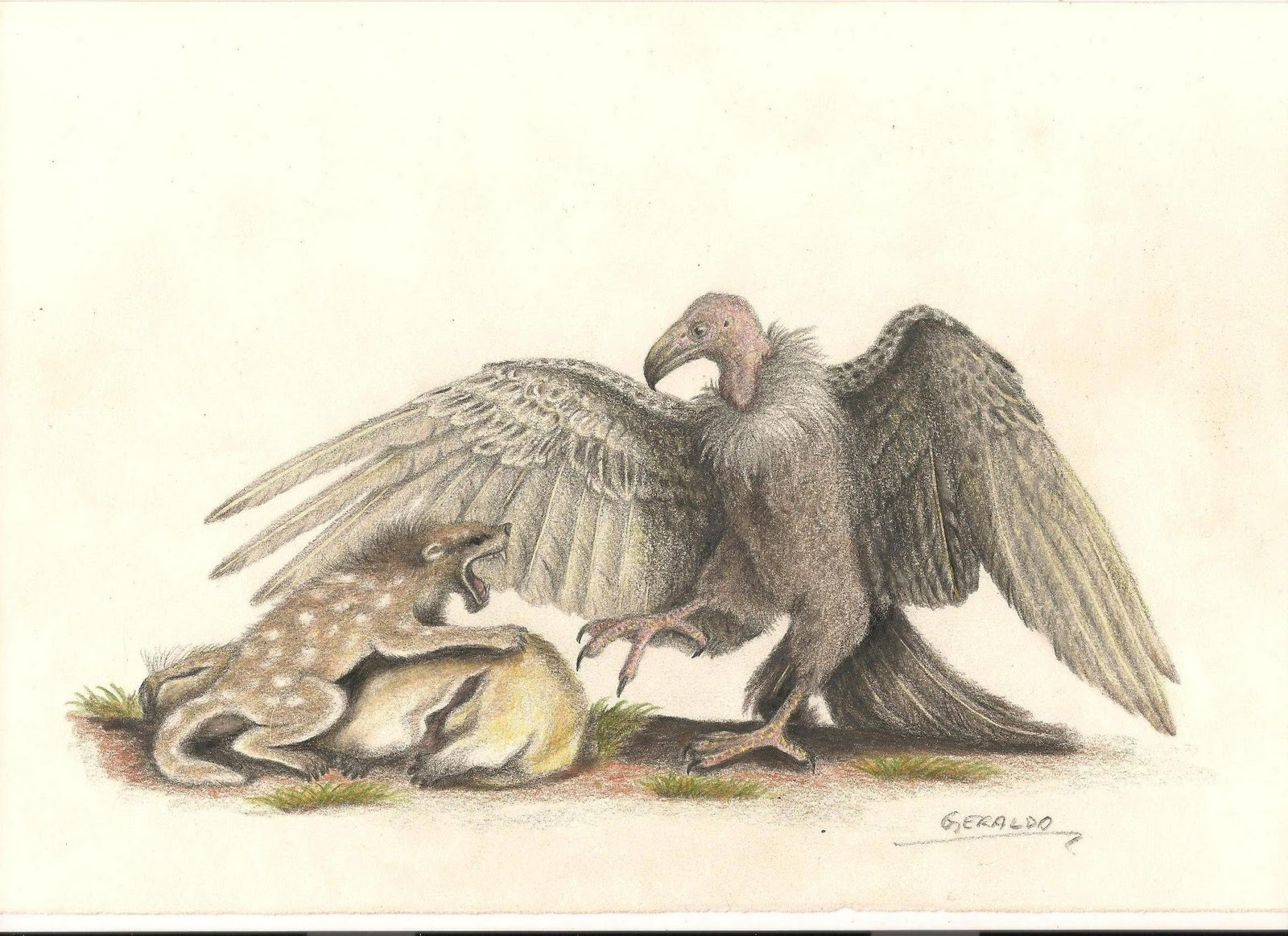 Taubatornis campbelli (Geraldo de França Jr)