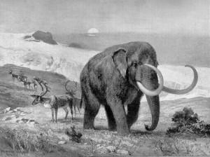 Wollhaarmammut (Heinrich Harder)