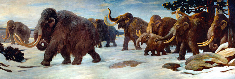 Wollhaarmammut (Charles. R. Night)