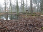 Damwildgehege (Alte Fasanerie Hanau)