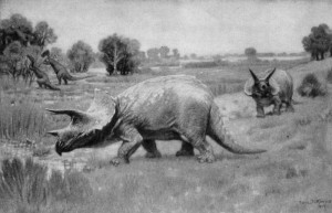 Triceratops (Charles R. Knight)