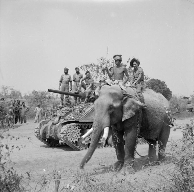 THE BRITISH ARMY IN BURMA, MARCH 1945, The British commander and Indian crew of a Sherman tank of the 9th Royal Deccan Horse, 255th Indian Tank Brigade, encounter a newly liberated elephant on the road to Meiktila, 29 March 1945.