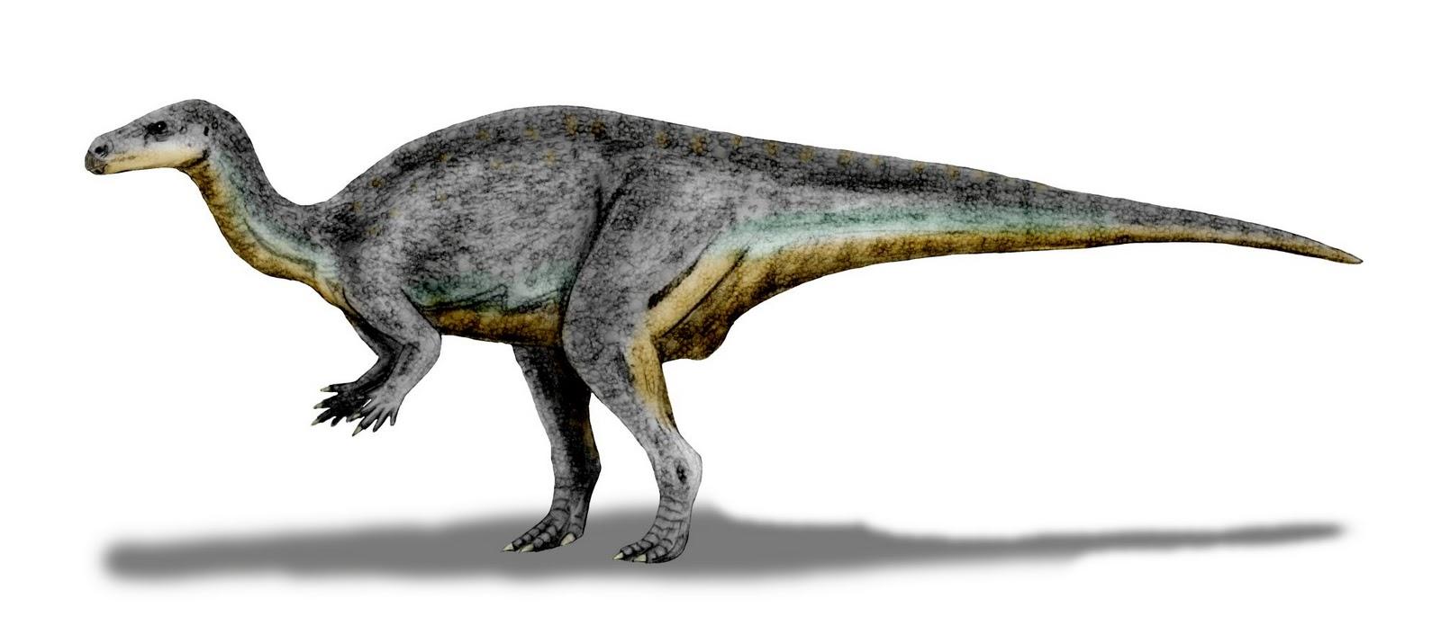 Camptosaurus dispar (© N. Tamura)