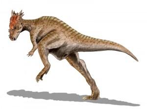 Dracorex hogwartsia  (© N. Tamura)