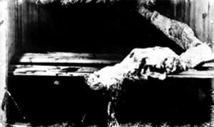 """Der """"Effingham-Kadaver"""" von 1947, zeitweise für einen Cadborosaurus gehalten, war wahrscheinlich ein verrottender Riesenhai"""