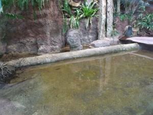 Anlage für Mississippi-Alligatoren (Tierpark Hellabunn)