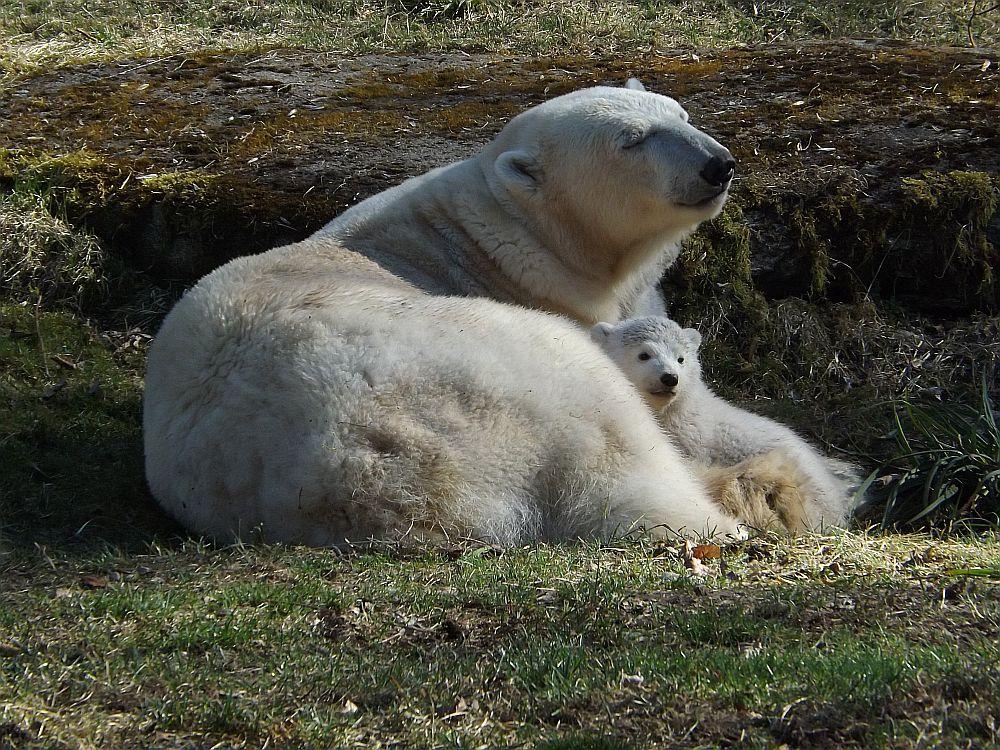 Giovanna und ihre Kinder, 20.03.2014 (Tierpark Hellabrunn)