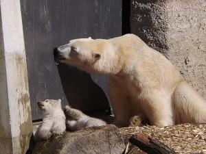 Giovanna und ihre Kinder (Tierpark Hellabrunn)