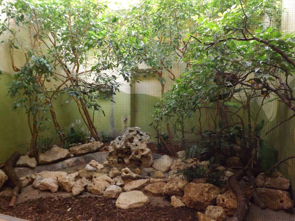 Anlage für Gouldamadinen, Zwergwachteln und andere (Zoo Augsburg)