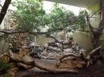 Anlage für Tangaren und andere (Zoo Augsburg)
