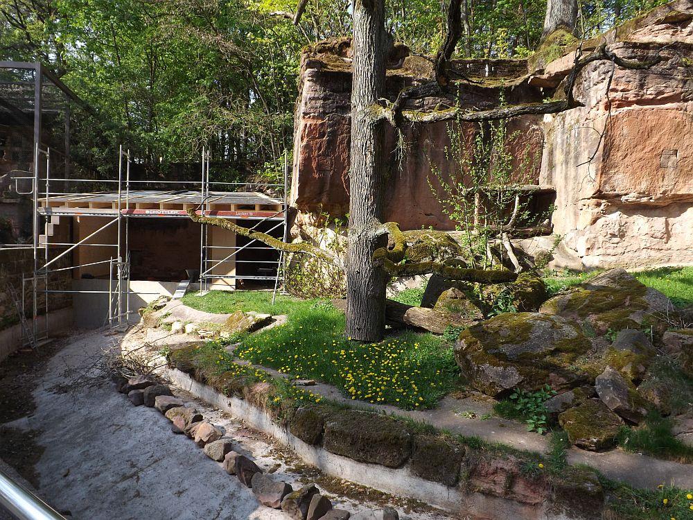 Baustelle Fischkatzenanlage (Tierpark Nürnberg)