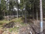 Luchsanlage(Wildpark Mehlmeisel)