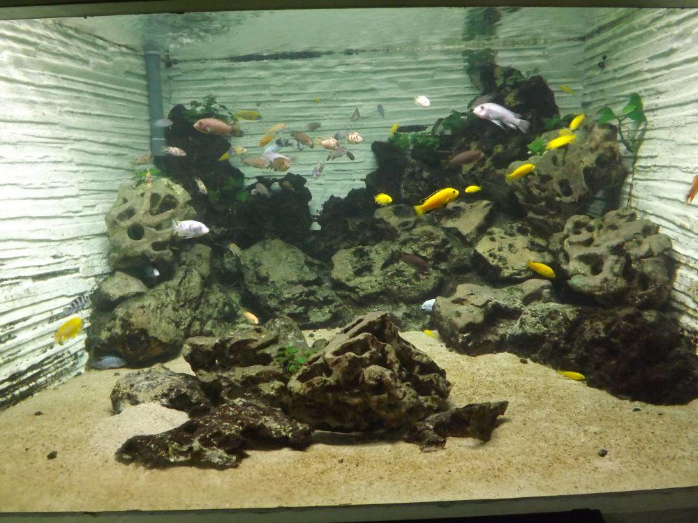 Aquarium mit Buntbarschen des Malawisees (Pflanzenschauhaus Luisenpark)