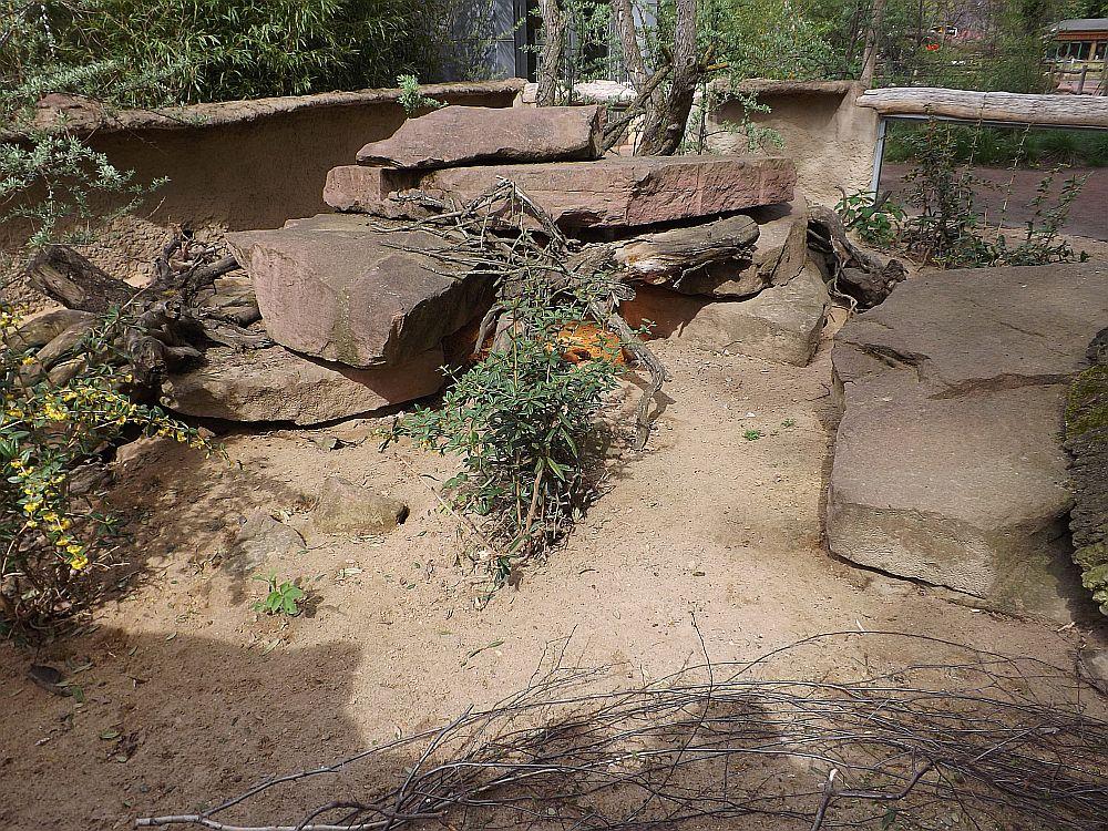 Anlage für Fuchsmangusten (Zoo Magdeburg)