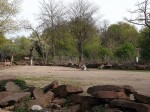 Africambo (Zoo Magdeburg)