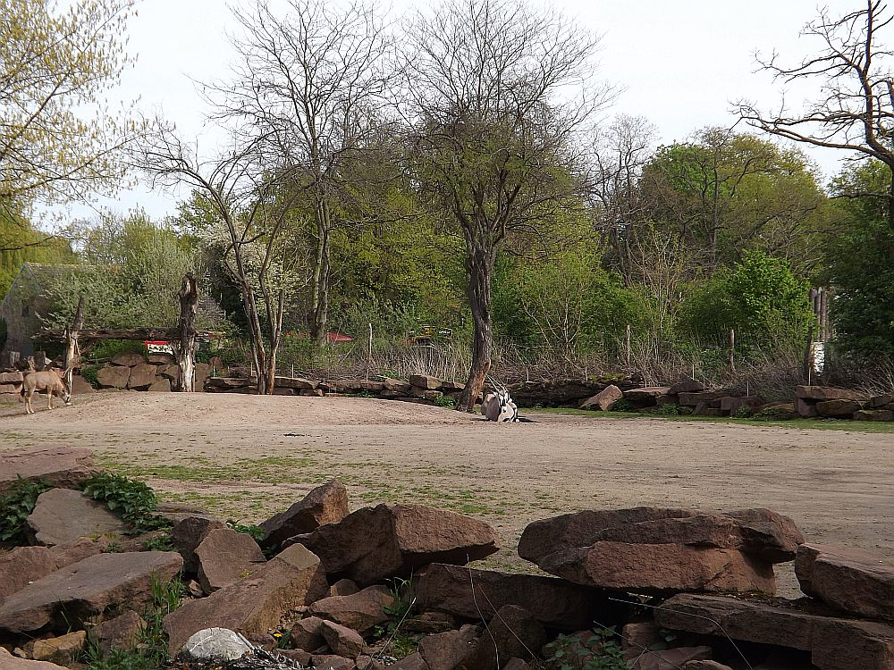 Africambo (Zoo Magdeburg)