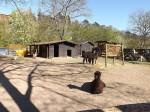 Alpakas und Störche (Tierpark Bad Kösen)