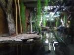 Anakondaterrarium (Tierpark Hellabrunn)
