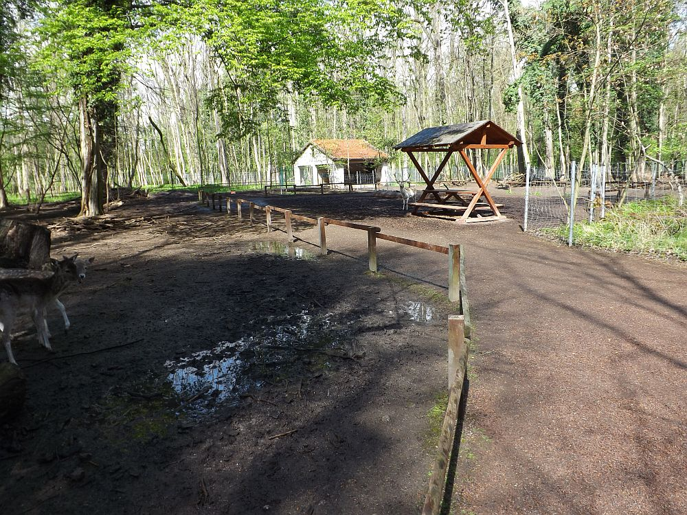Begehbares Damhirschgehege (Tierpark Köthen)