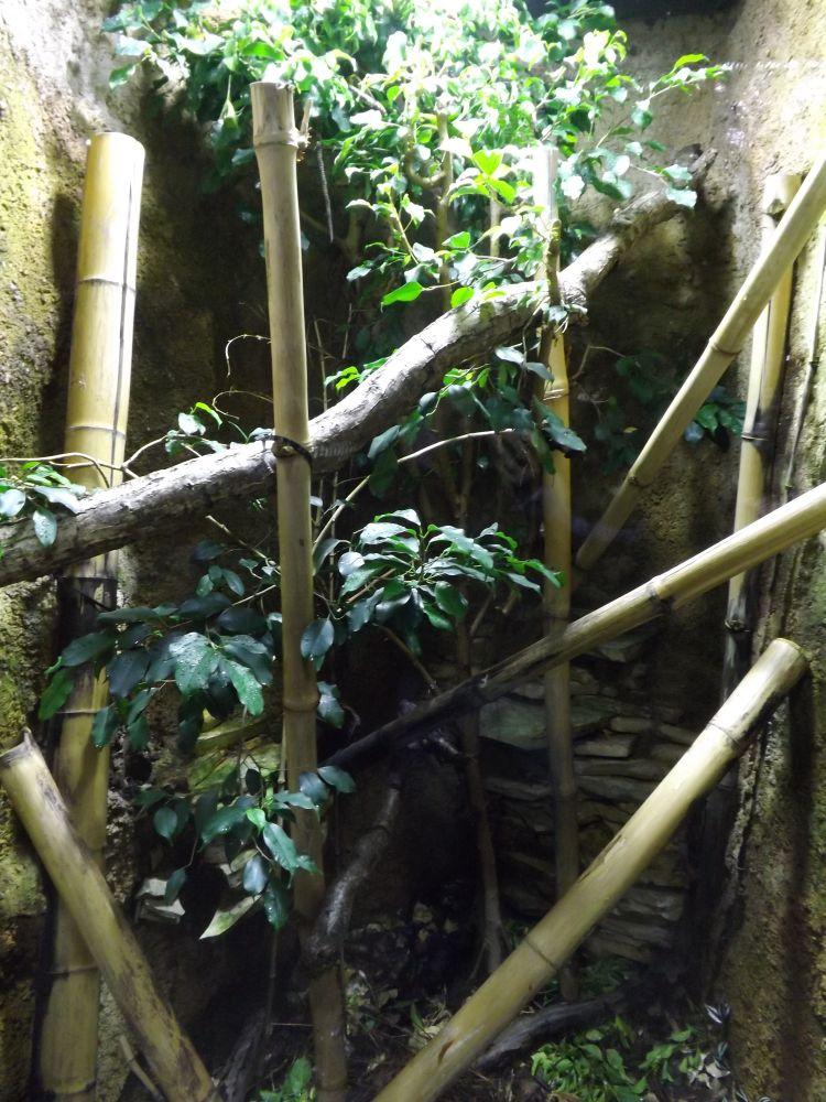 Hühnerfresserterrarium (Tierpark Hellabrunn)