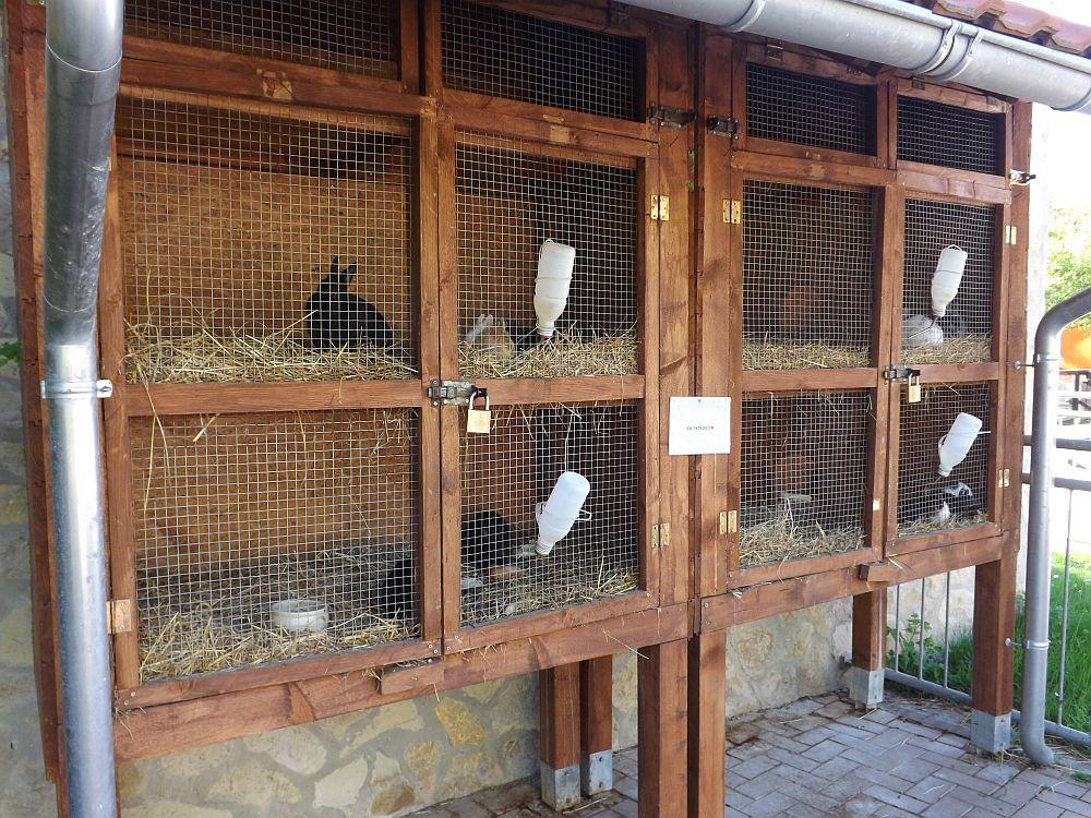 Kaninchenhaltung (Tierpark Bad Kösen)