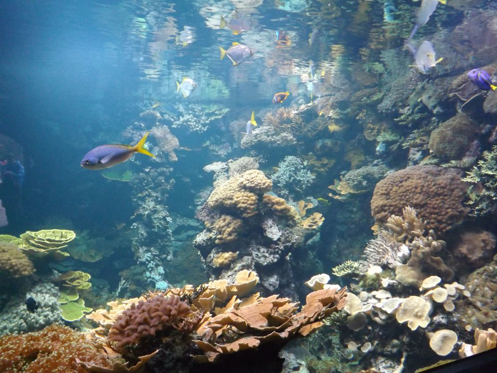 Korallenriff (Tierpark Hellabrunn)