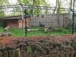 Leeres Leopardengehege (Tiergarten Staßfurt)