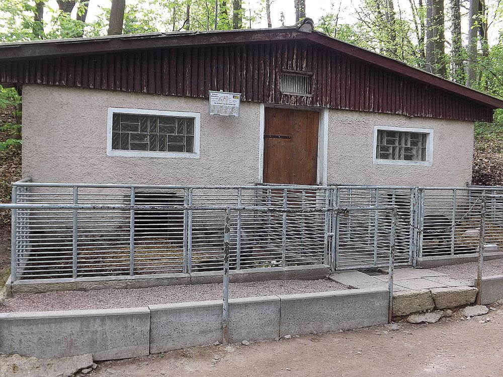 Minischweinanlage (Tiergarten Hirschfeld)